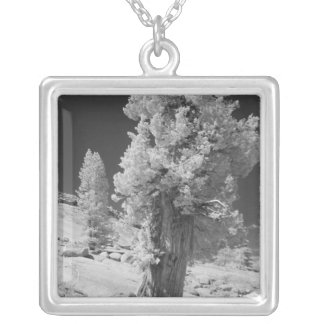 Infrared photo in East side of Yosemite National Silver Plated Necklace