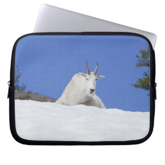 Ingalls Lake area, Billy Goat on snow Laptop Sleeve