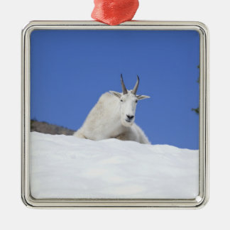 Ingalls Lake area, Billy Goat on snow Silver-Colored Square Decoration