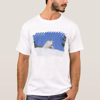 Ingalls Lake area, Billy Goat on snow T-Shirt