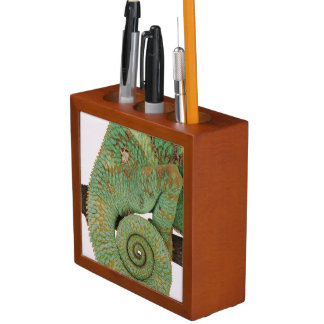 Inhabits dry mountainous areas. Indigenous Desk Organiser