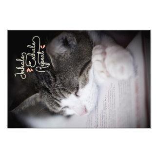 Inhale, Exhale, Repeat Sleepy Kitty Photo