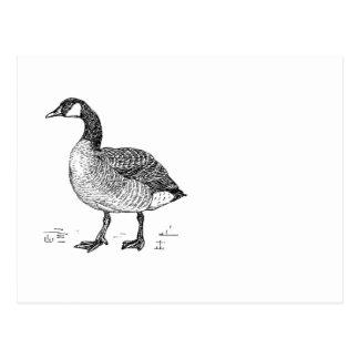 Ink Sketch Goose Design Postcard
