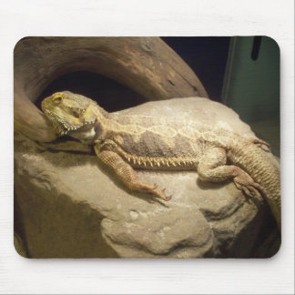 Inland Bearded Dragon Mouse Pad