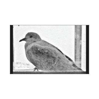 Innocent Dove Canvas Print