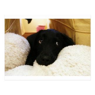 Innocent puppy.JPG Postcard