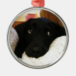 Innocent puppy.JPG Silver-Colored Round Decoration