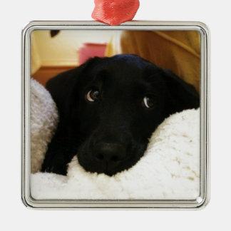 Innocent puppy.JPG Silver-Colored Square Decoration