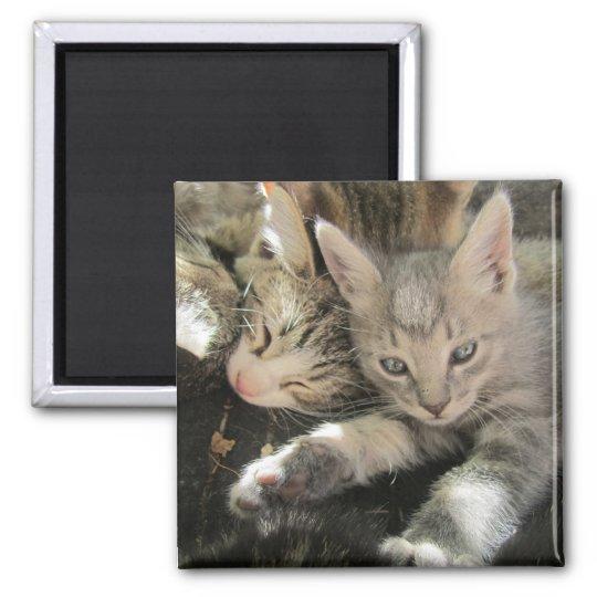 Inoki Kitten Square Magnet