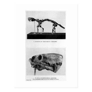 Inostrancevia alexandri art postcard