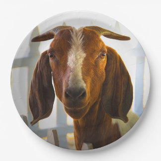 Inquisitive Goat Asks Questions Paper Plate