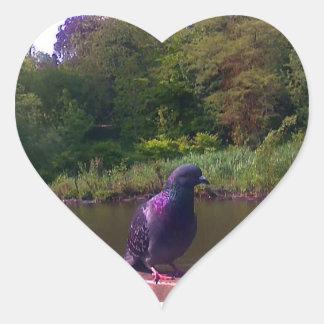 Inquisitive Pigeon Heart Sticker