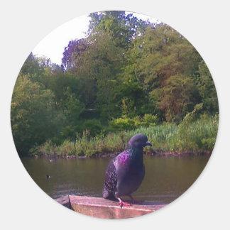 Inquisitive Pigeon Round Sticker