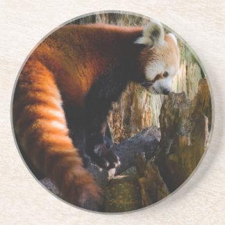 inquisitive red panda coaster