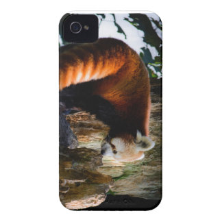 inquisitive red panda iPhone 4 covers