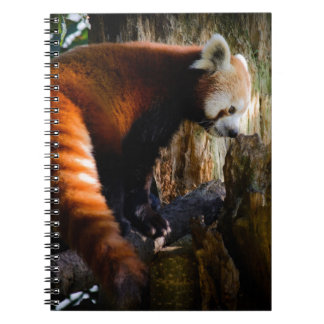 inquisitive red panda notebook
