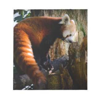 inquisitive red panda notepad