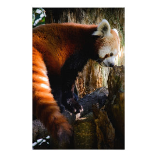 inquisitive red panda personalised stationery