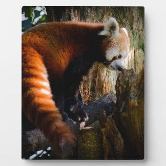 inquisitive red panda plaque