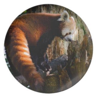 inquisitive red panda plate