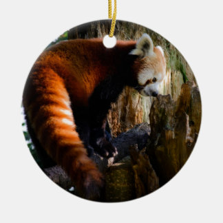 inquisitive red panda round ceramic decoration