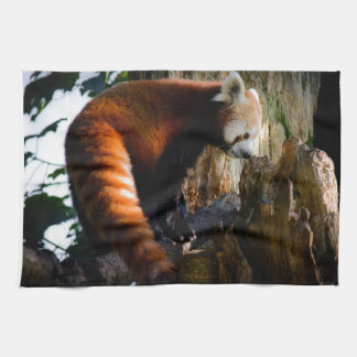 inquisitive red panda tea towel