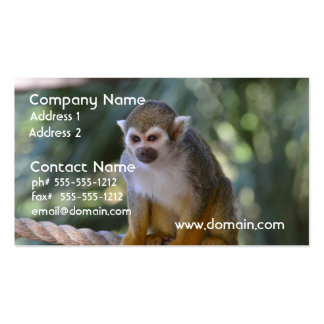 Inquisitive Squirrel Monkey Pack Of Standard Business Cards