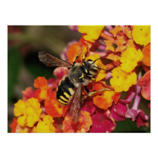 Insect Autumn Poster