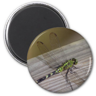 Insect Dragonfly 6 Cm Round Magnet