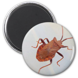 Insect   Magnet