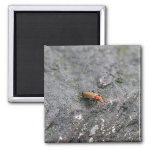 Insect on a rock. fridge magnets