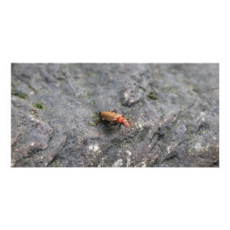 Insect on a rock. photo cards