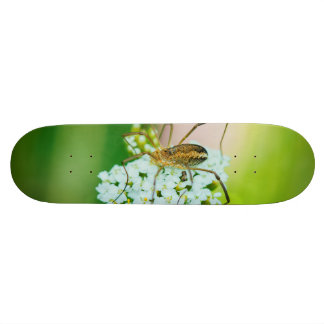 Insect on a white flower macro skate board deck