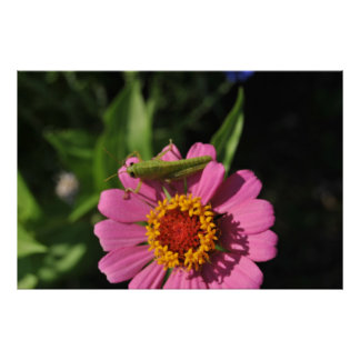 insect on flower posters