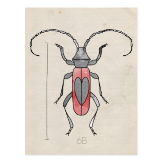 Insect Series | Red Beetle Post Card