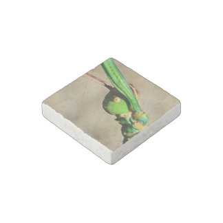 Insect Themed Stone Magnet