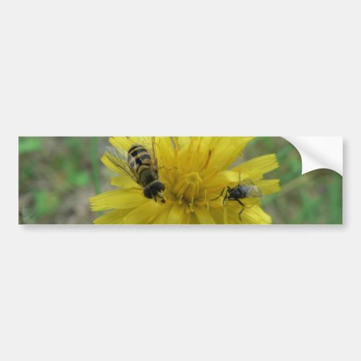 Insect Wasp Bumper Stickers
