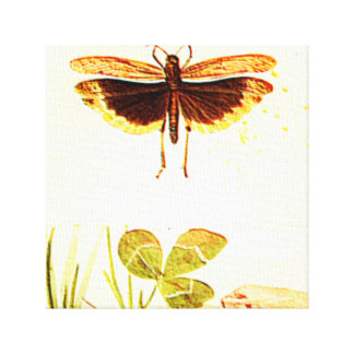 INSECT WITH CLOVER STRETCHED CANVAS PRINTS