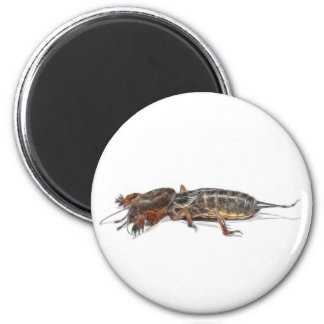 INSECTS 6 CM ROUND MAGNET