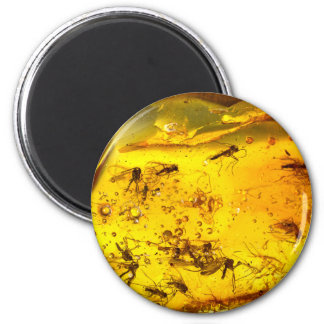 Insects in amber  | 6 cm round magnet