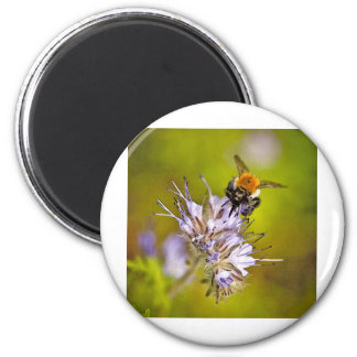 Insects Refrigerator Magnet