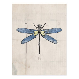 Insects Series- Dragonfly by VOL25 Postcard