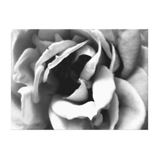 Inside a Rose , in black and white Canvas Prints