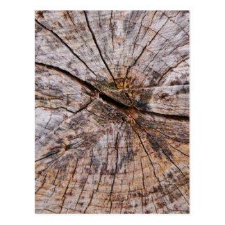 Inside a Tree Trunk Postcard