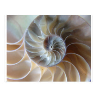 Inside Nautilus Postcard