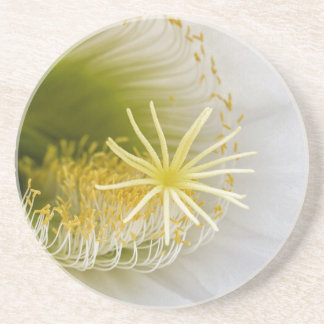Inside of an Echinopsis in bloom Coaster