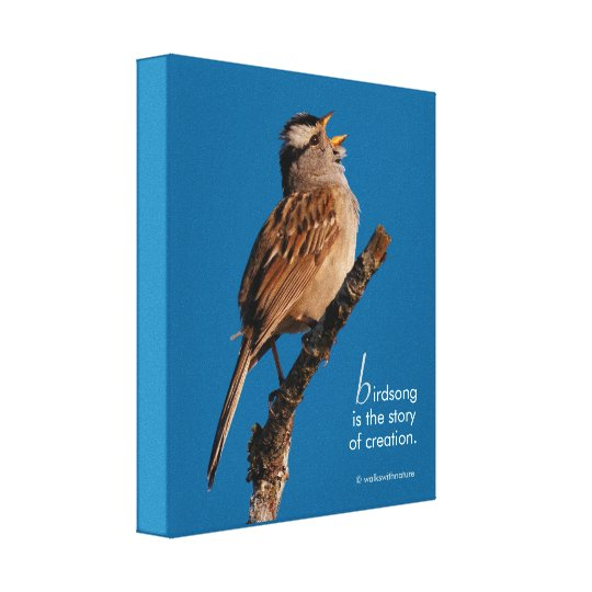 "Inspirational ""Birdsong is the Story of Creation"""