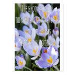 Inspirational Crocus Flowers Post Cards