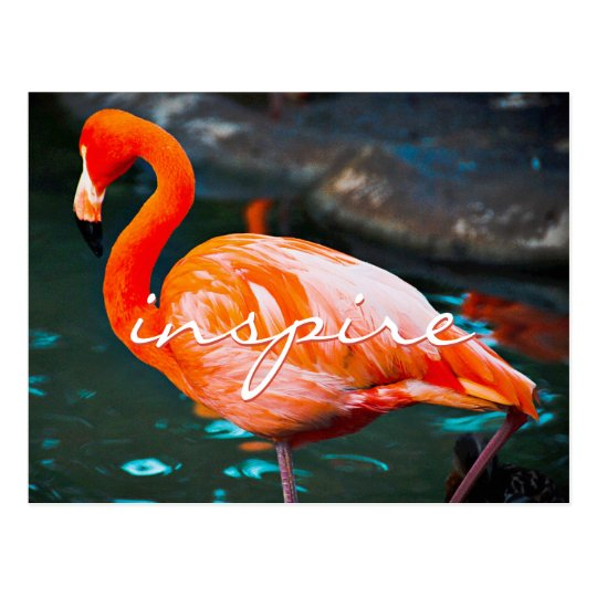 """Inspire"" orange pink flamingo photo postcard"