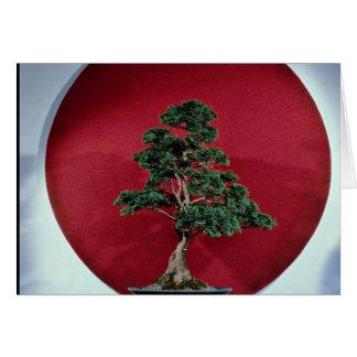 Inspiring Bonsai tree Cards